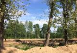 Многофункциональная спортивная площадка появится в Коряжме осенью