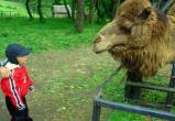 В зоопарке Котласа появилась верблюдица Ася и северные олени