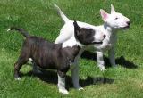 Полиция назвала опасные породы собак, их всего 69