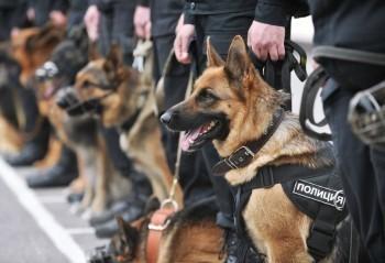 В коряжемской ИК-5 и других колониях Поморья ищут хозяев для «отставных» служебных собак